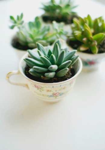 130116_teacup_plant