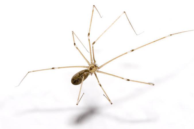 startsatsixty-spider