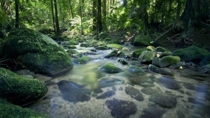160529_Best-View_Mossman-Gorge