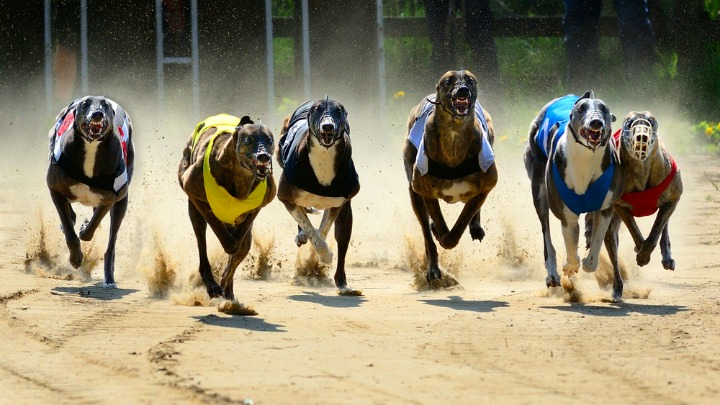 ACT chases greyhound racing ban, other states unrepentant