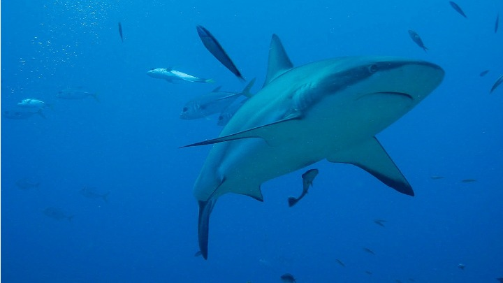 Could these tours increase the likelihood of shark attacks in Western Australia?