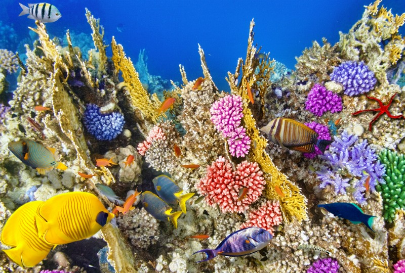 Great Barrier Reef named world's best place to visit in 2016