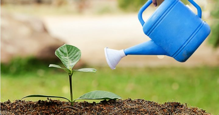 DIY tips for watering your plants while youre on holidays