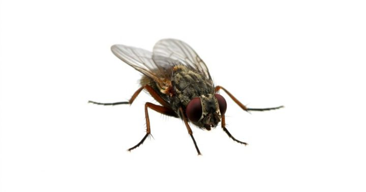 051216_fly