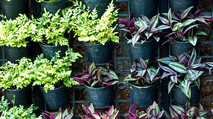Everything You Ever Wanted To Know About Vertical Gardens