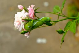 Keep an eye out for pests in your garden.