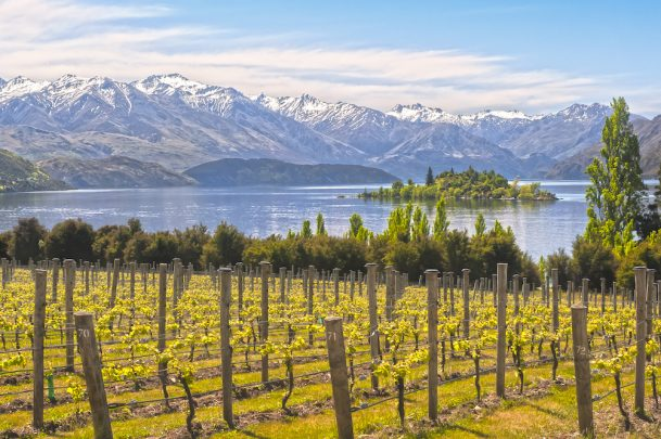 New Zealand's wineries offer stunning views