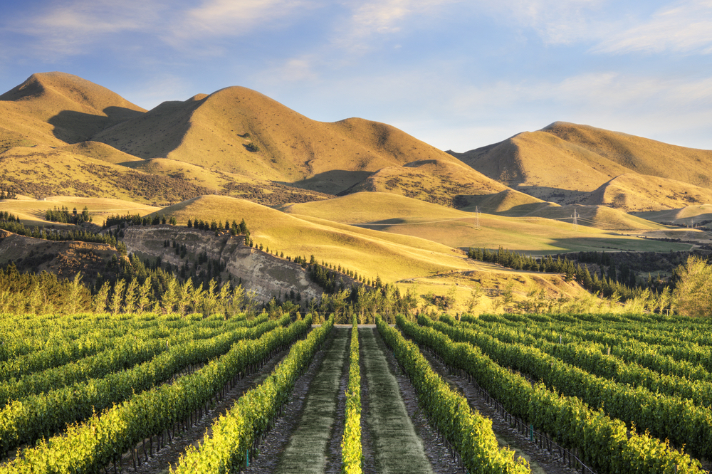 Vineyards are at the foothills of the magnificent alps in Waipara Valley and Canterbury