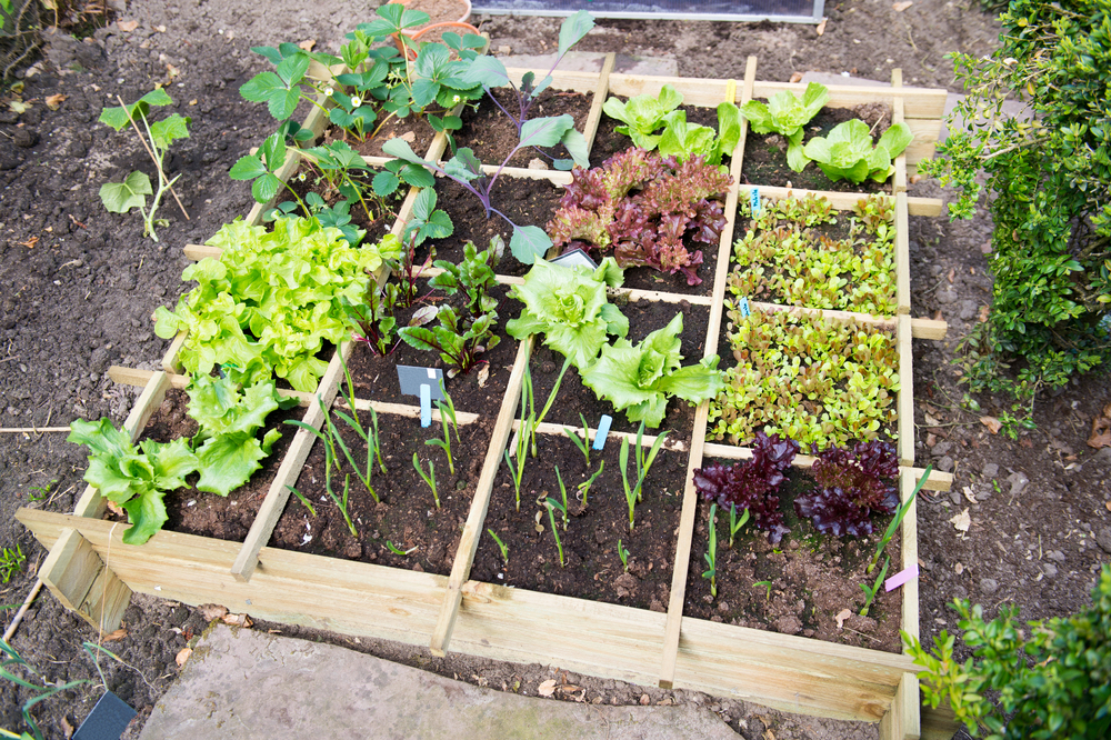 Show the vegetable garden some love this Mother's Day