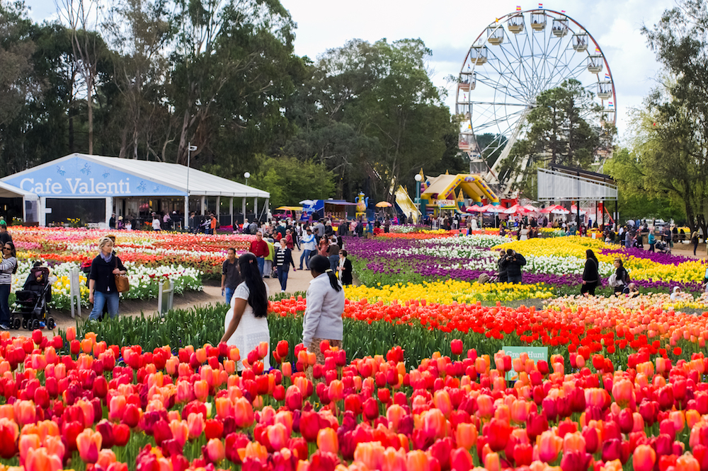 Floriade lights up Canberra with a spectacularly colourful display
