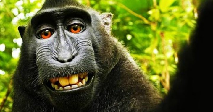PETA sues to get monkey rights to selfies it took