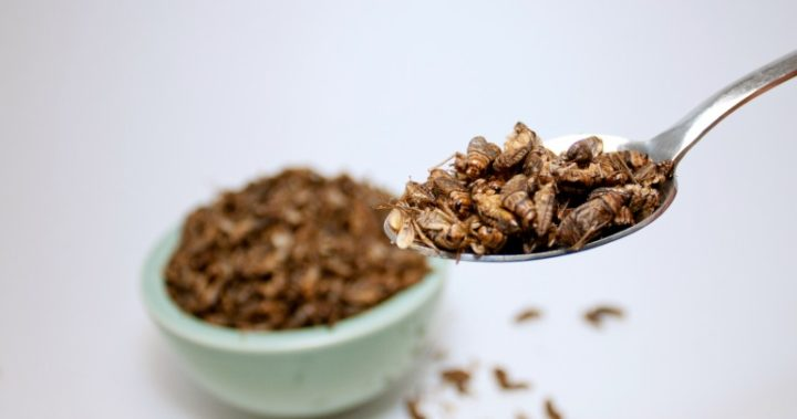 Edible insects might seem gross, but they have a heap of benefits