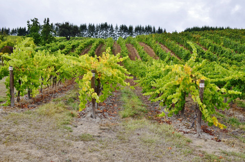 Pfeiffer Winery (10) (800x530)