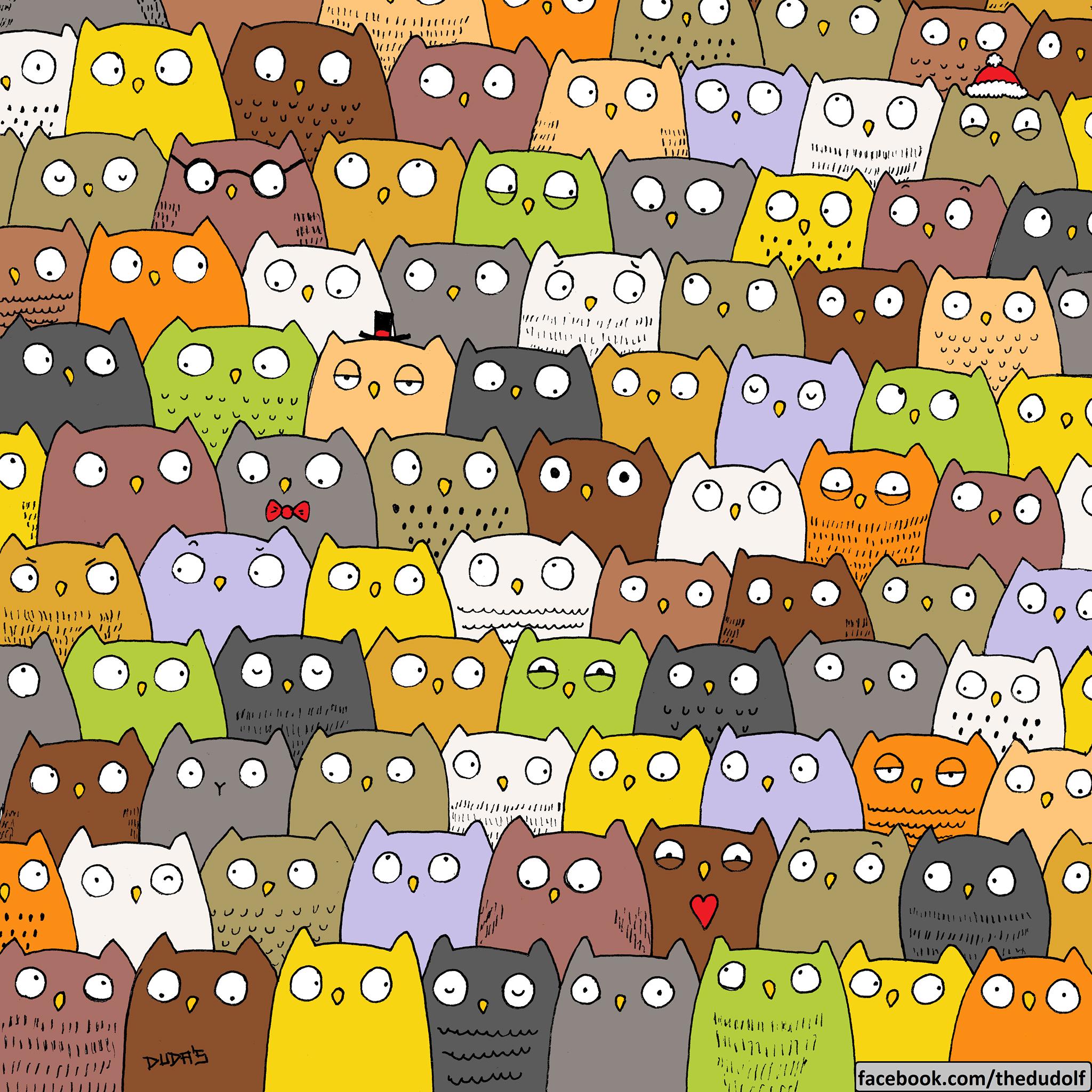 cat-owl-challenge